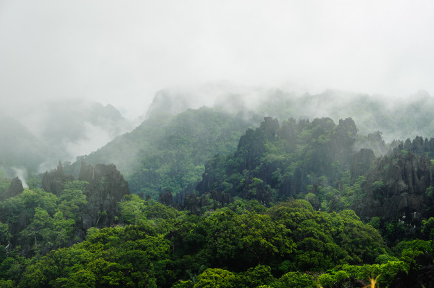 fog_covers_distant_trees_limestone_mountain_side_laos_45756_159_1.jpg